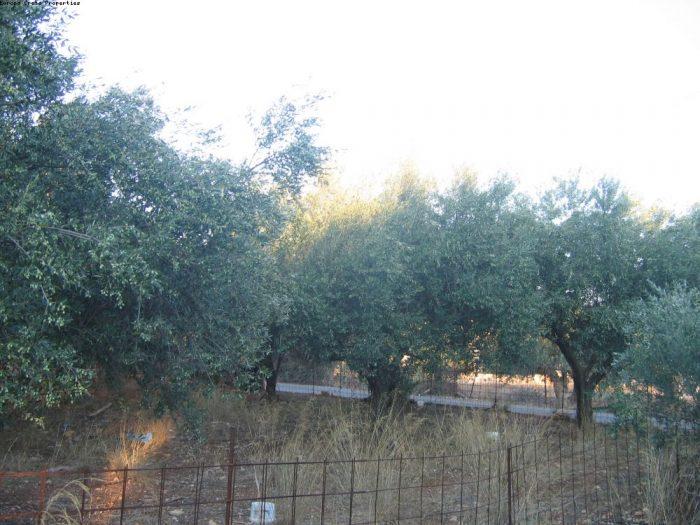 Plot in the settlement of Aroni