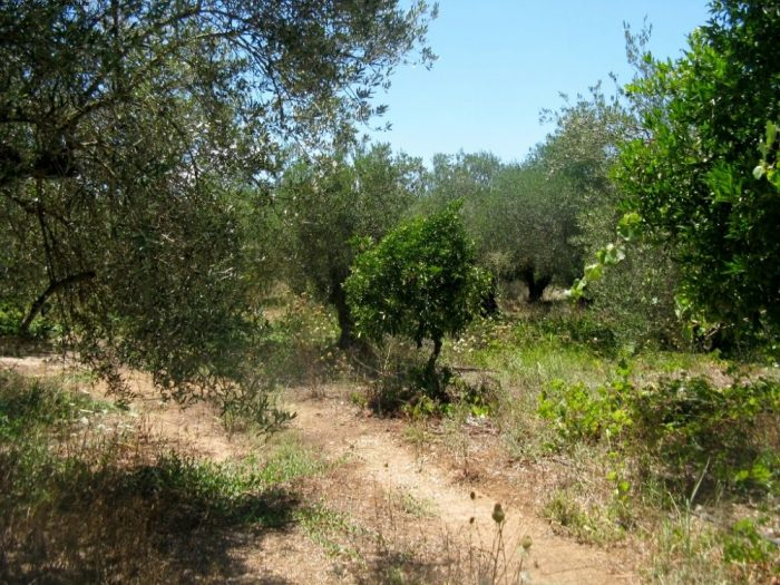 Plot for sale in Kalyves close to the sea