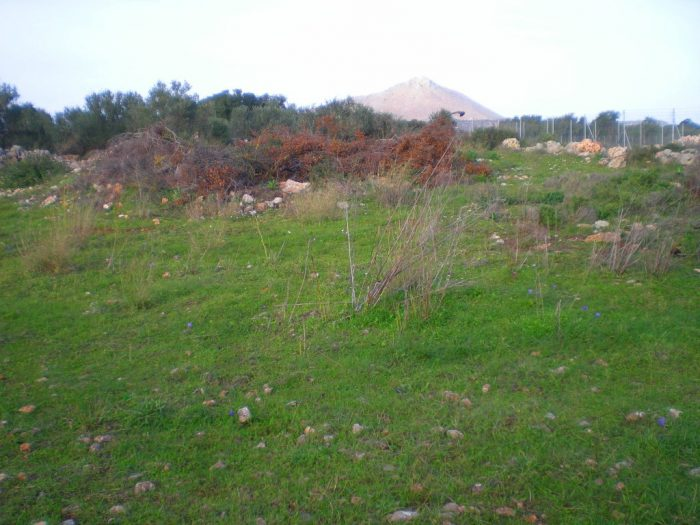 Farm land in Sternes, Akrotiri