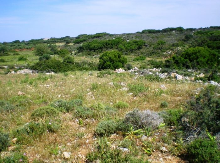 Large agricultural plot on the Akrotiri