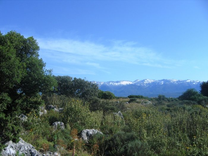 Large plot of land in Sternes, Akrotiri