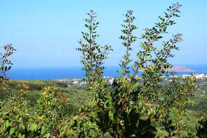 Plot in Xirokambi with nice sea view